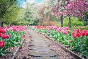 beautiful bloom blooming 414160 300x200 - beautiful-bloom-blooming-414160
